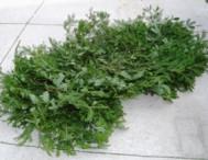 Plain Fresh Evergreen Grave Blanket