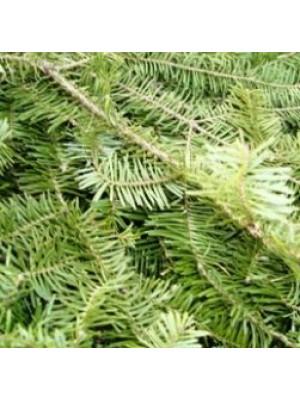 Fresh Evergreen Balsam Pine Pieces Sold Per Pound