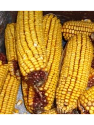 Ear Corn Wildlife Food