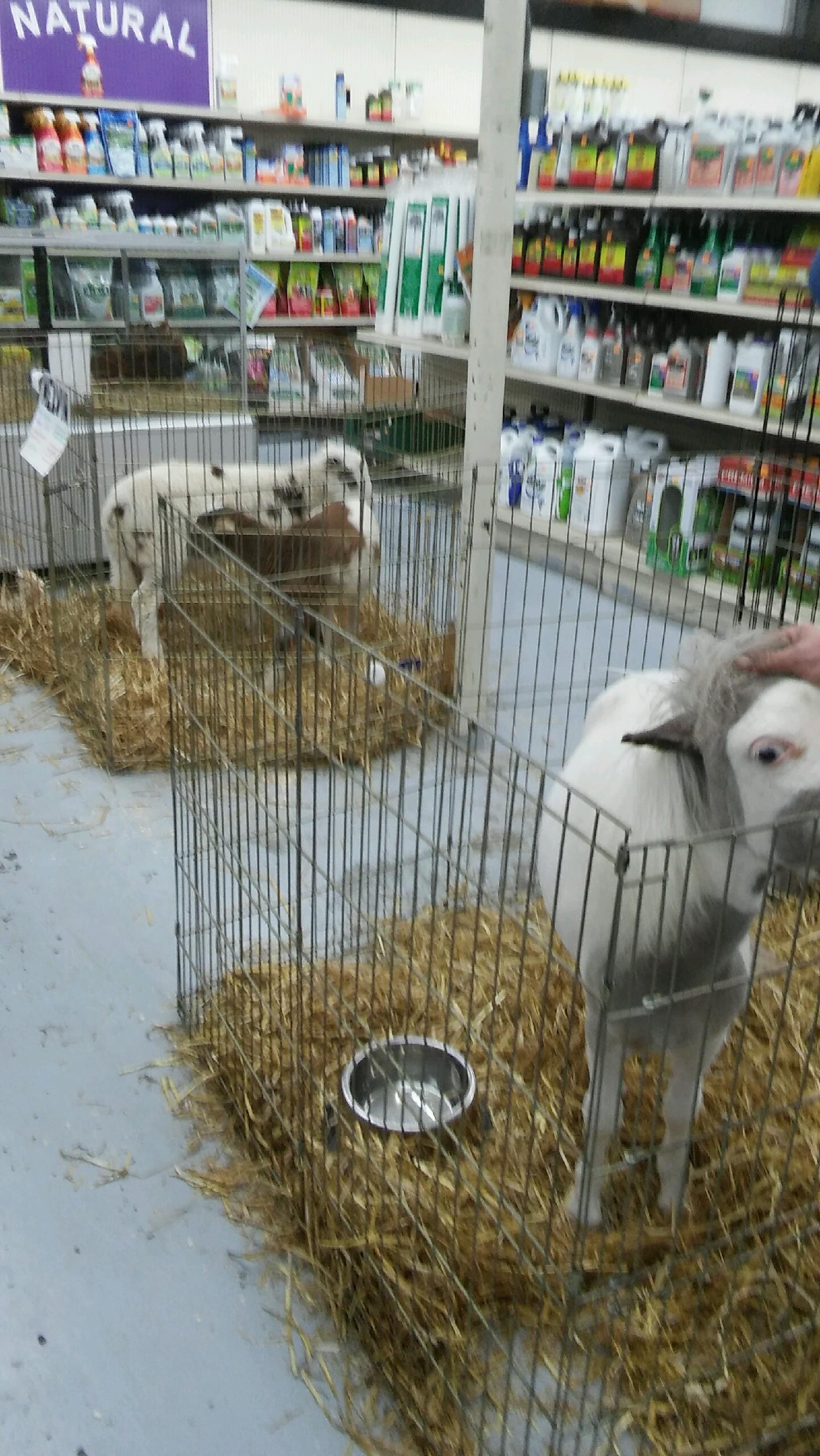 Animals In Moline - Blog